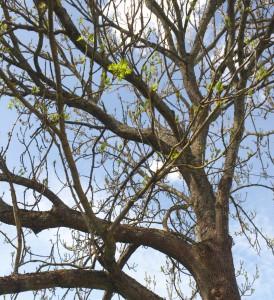 Permalänk till:Träd- och buskbeskärning